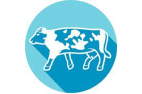 cattle_icon